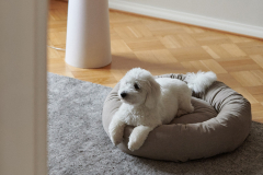 Dogbed S